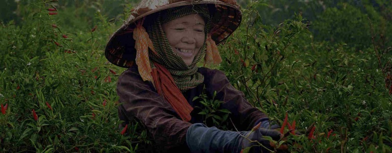 Woman picks chilis in a field in Vietnam. Photo by Trung Vo Chi, CGAP Photo Contest