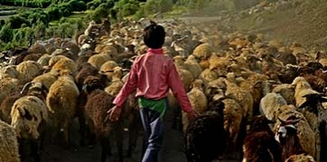 Young boy herds sheep in the mountains of north India. Photo by Md. Shahnewaz Khan, CGAP Photo Contest