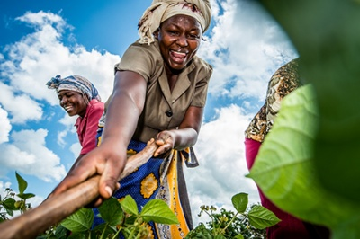 Kenyan woman smiles as she cuts crops. Low-income individuals like field workers often face unstable income flows and difficulty in using formal financial services.