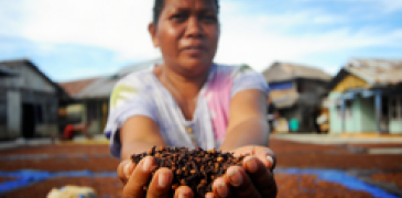 Woman entrepreneur in Indonesia shows cloves, a type of spice that's drying in the sun.