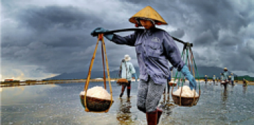 Low-income wage earner carries newly harvested rice